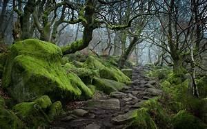 Forest tree landscape nature moss wallpaper | 3840x2400 ...