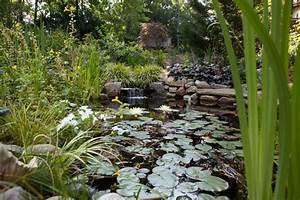 Pond Ecosystem  Working With Nature