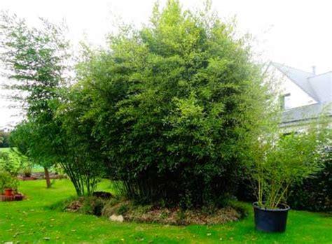 Impressionnant Plantes Pour Jardin Japonais #3  Les 8