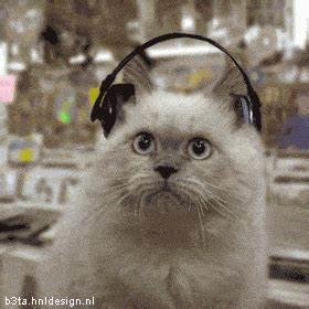 Des Chats Dans Un Magasin De Musique