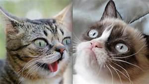 NOO: TIME's Grumpy Cat Photo Shoot Copycatted Bullett's ...
