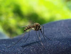 Wie Kann Man Sich Vor Mückenstichen Schützen : wie man sich vor dem erreger sch tzen kann ~ Markanthonyermac.com Haus und Dekorationen