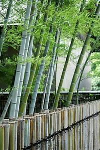 Bambou A Planter : comment planter une haie de bambou plantation du bambou ~ Premium-room.com Idées de Décoration