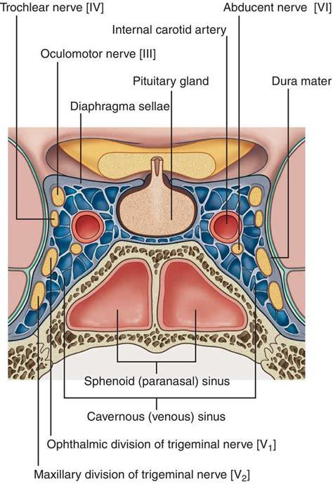 images  neuroanatomy  pinterest head