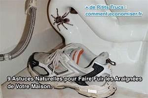 Se Débarrasser Des Mouches Naturellement : comment chasser les araign es naturellement courroie de transport ~ Melissatoandfro.com Idées de Décoration