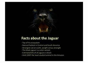Black Jaguar Foundation - Participate to preserve your planet.