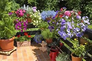 blumenkasten ganzjahrig bepflanzen beispiele fur With französischer balkon mit sommerblumen für den garten