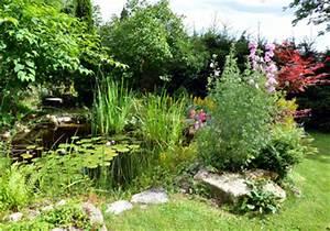 Wasserpflanzen Teich Kaufen : wasserpflanzen jetzt einfach und g nstig kaufen auf ~ Michelbontemps.com Haus und Dekorationen