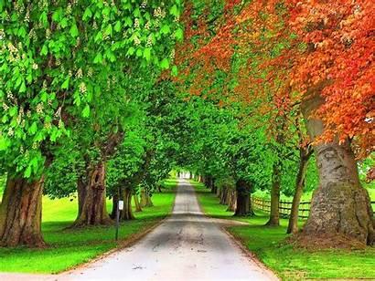 Trees Background Nature 4k