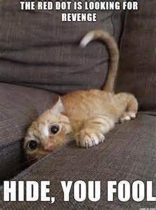 cat memes best 25 cat memes ideas on cat memes