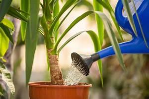 Plantes à Suspendre : plante morte sympt mes solutions ooreka ~ Premium-room.com Idées de Décoration