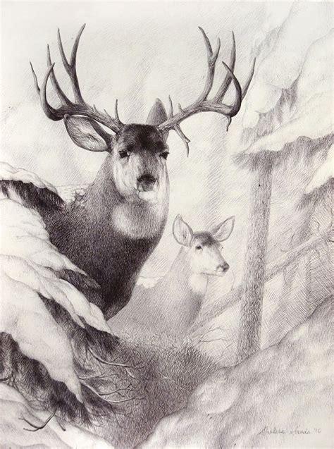 simple drawings  wildlife drawings   pinterest