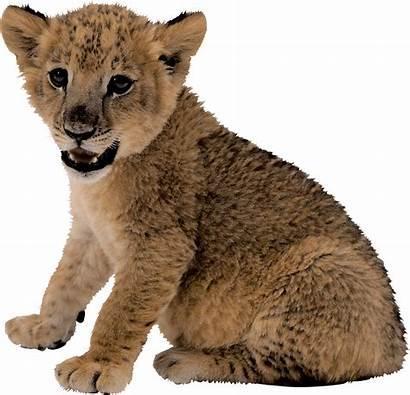 Lion Mountain Transparent Pluspng