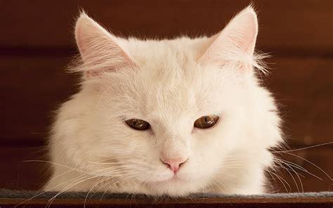 white cat names unique white cat names cute cats