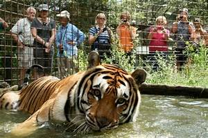 Take A Day Tour of Big Cat Rescue