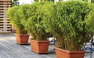 Bambou Pour Haie Brise Vue : bambou en bac brise vue gallery of bambou with bambou en ~ Premium-room.com Idées de Décoration