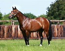 Image result for FRANKEL