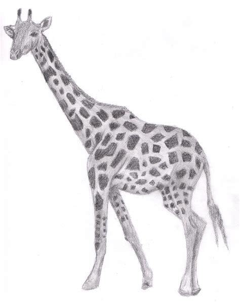 drawing giraffe  justinms  deviantart