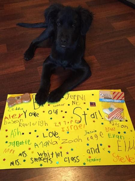 ebenezer animal hospital puppy hit with bbs now healthy visiting local elementary