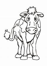 Cow Coloring Facing Resources Worksheets sketch template
