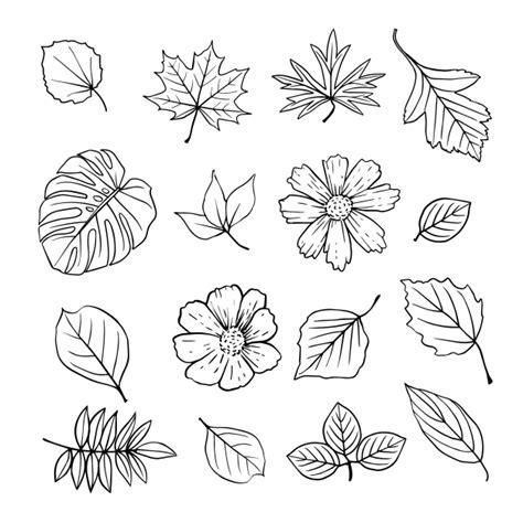 Coleción de hojas y flores dibujadas a mano Descargar