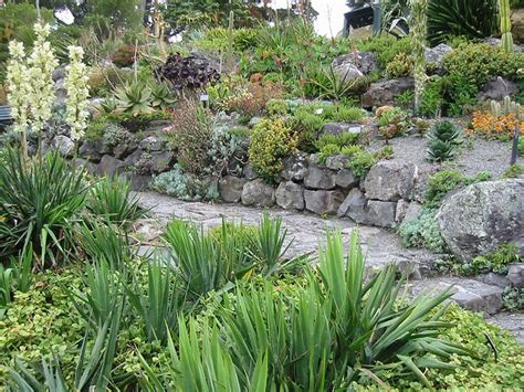 top 16 ideas about succulent rock wall on