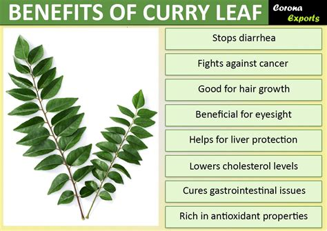Curry Leaves And Its Top 9 Benefits A Gift From God