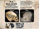 New Study: Top 5 Characteristics of Real Alien Cone Head ...