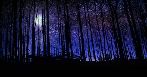 Beautiful Forest At Night Sky Stock Footage Video 100