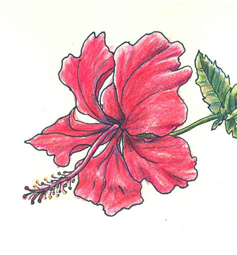 hoontoidly simple pink rose drawing images