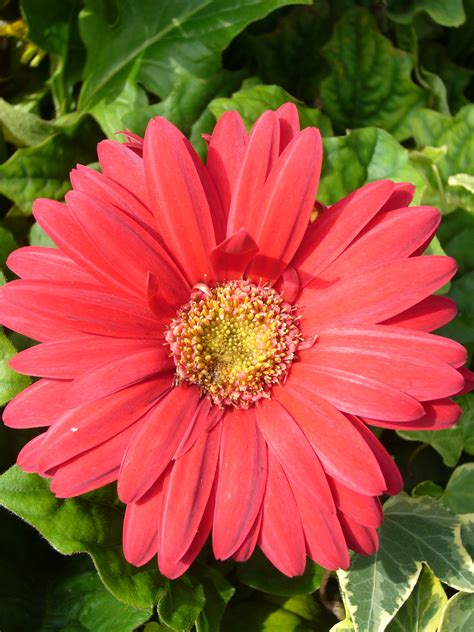flower kinds with pictures all types of flowers with pictures and names beautiful flowers