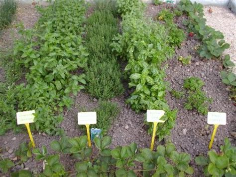 3 ideas to start small herb garden on your courtyard