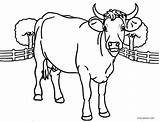 Cow Coloring Printable Cartoon Face Head Cows Cool2bkids Adults Getcolorings Sheets Animals Children Getdrawings Colorings sketch template