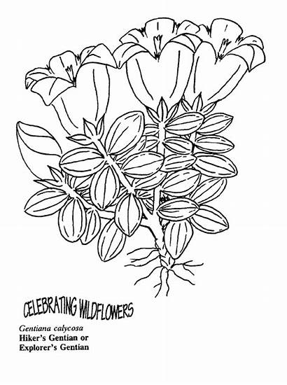 Plants Arctic Coloring Pages Template Childstoryhour