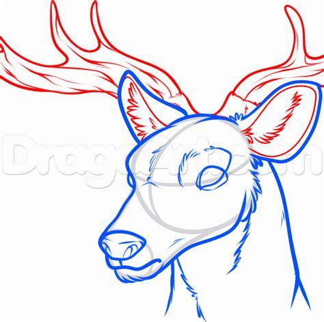 draw  deer head step  step forest animals