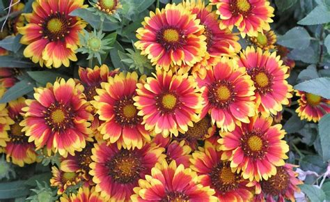Garten Pflanzen September by Ziergarten Die Besten Gartentipps Im September