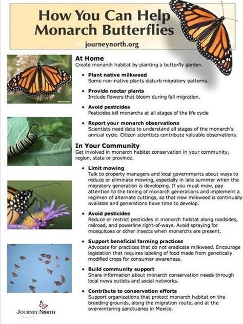 milkweed plants for 1000 images about save the monarch on gardens 7504