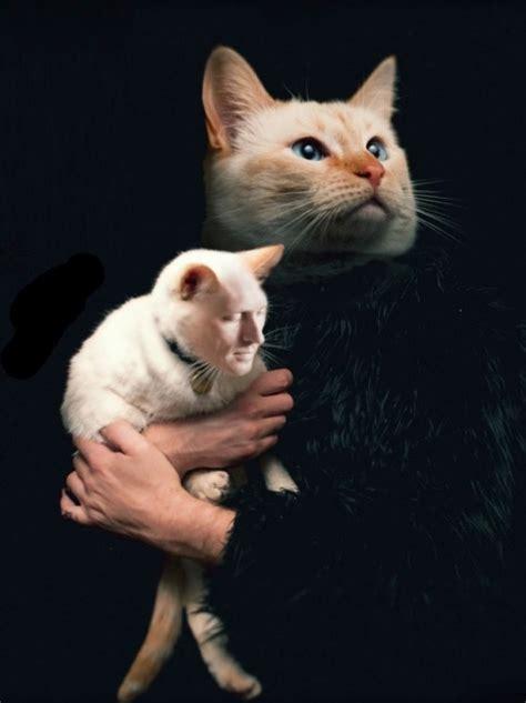 imagenes de animales  personas intercambiando caras