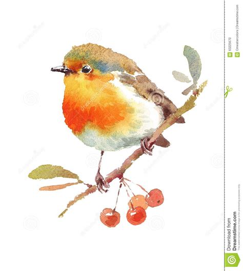 robin bird  berries watercolor illustration hand drawn