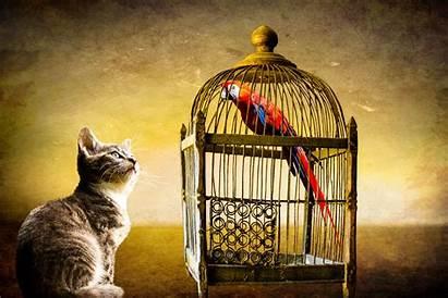 Cage Bird Cat Parrot Fantasy Animals Freedom
