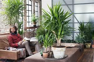 Plante De Salon : januar 2015 die yucca ist die zimmerpflanze des monats blumenb ro ~ Teatrodelosmanantiales.com Idées de Décoration