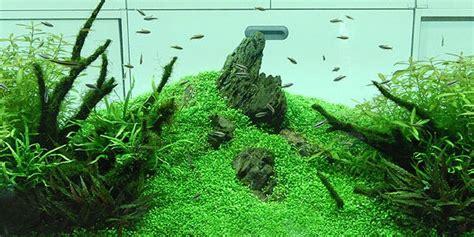 Understanding Nature Aquascaping Style  The Aquarium Guide