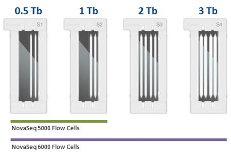 Illumina Flow Cell Novaseq Illumina Genetica