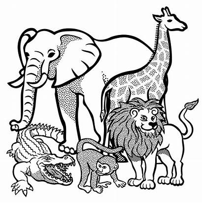 Outline Animal Drawing Clipart Getdrawings