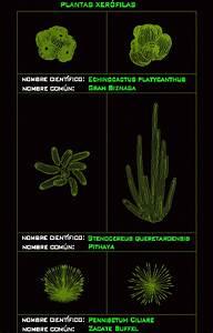 Desert Plants 2d Dwg Block For Autocad  U2022 Designs Cad