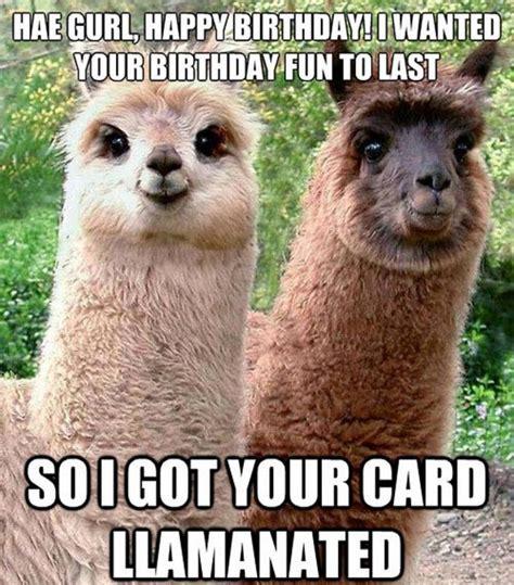 Llama Birthday Meme - funny llama pictures