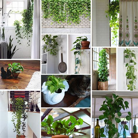 Plants On Windows by The Sill Pothos Plant Great For Hanging In Windows