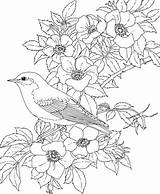 Bluebird Eastern Coloring Bird Pages Flower Rose State York Birds Adult Colouring Flowers Printable Adults Colour Printables Roses Dogwood Nature sketch template