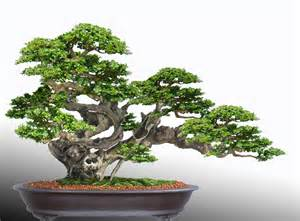 bonsai design the of bonsai project the principles of bonsai design by robert steven