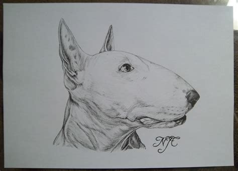 english bull terrier  sketch landn foundmyself